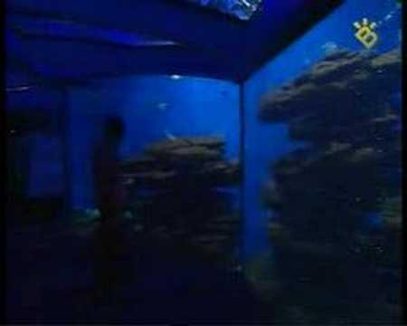 tiburones palma aquarium fidel careaga