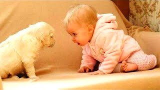 Funny Videos ★ Best Funny Babies & Dogs 2016 ★ New Funny Videos 2016