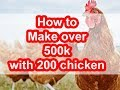 How to make over 500k with just 200 chicken How much does a poultry farmer make in Kenya