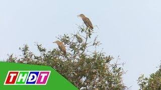 Đàn cò xuất hiện ở Khu di tích Giồng Thị Đam - Gò Quản Cung | THDT