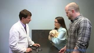 5 дій власників тварин які ускладнюють ветеринарну медицину