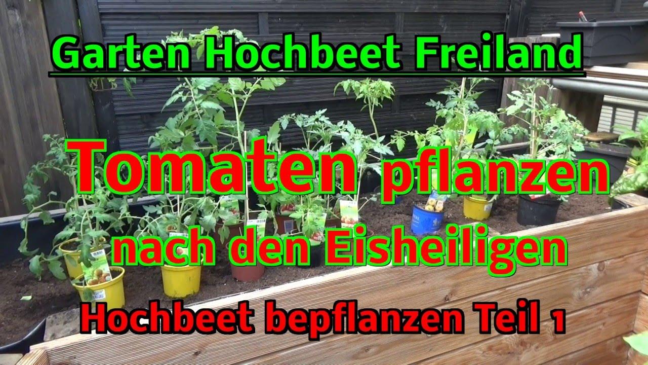 Hochbeet Im Garten Selbstversorgung Tomaten Pflanzen Im Freiland