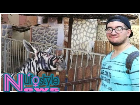 Egyptian zoo is accused of painting a donkey to look like a zebra