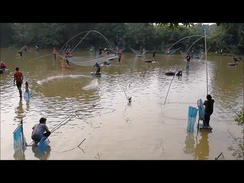 Amazing fishing in thailand - Asian catching fish with net fishing , case net