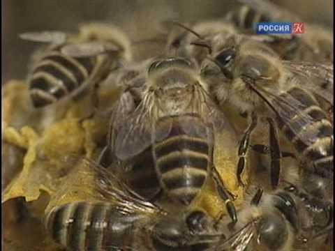 Удивительная жизнь пчёл и ос
