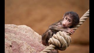 Смешные обезьяны.  Приколы с животными на канале