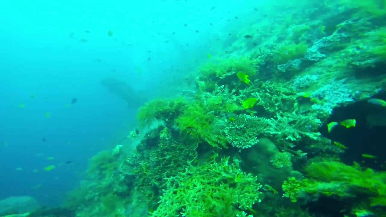 """""""Amazing Bali Scuba Diving Video"""" With """"GoPro Hero 4"""