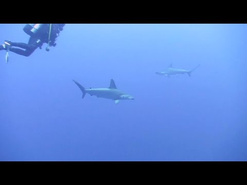 Project Shark - Red Sea April 2015