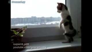 Котёнок скучает