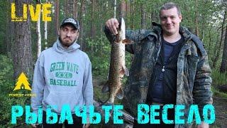 Как ловить на живца? Рыбачим вместе с Forest-Home (LIVE)..