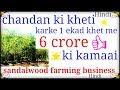 How To Start a Sandalwood Farming In India | Best Farming Business |in Hindi