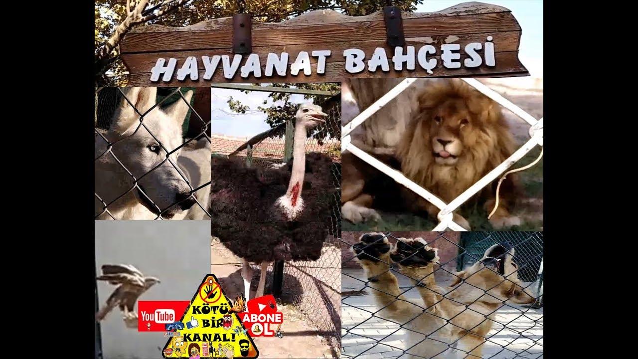 Hayvanat bahçesi gezimiz ;) en yırtıcı türler en sakin türler Hayvanlar alemi gezilecek yerler