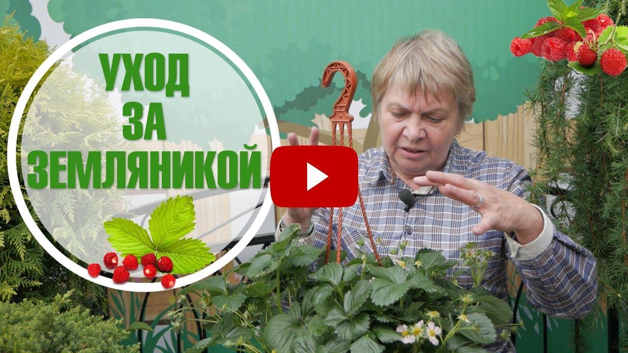 Земляника садовая (Клубника)➡ Препараты от вредителей
