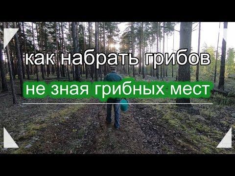 Вопрос: Какова карта грибных мест Миорского района (Витебской области)?