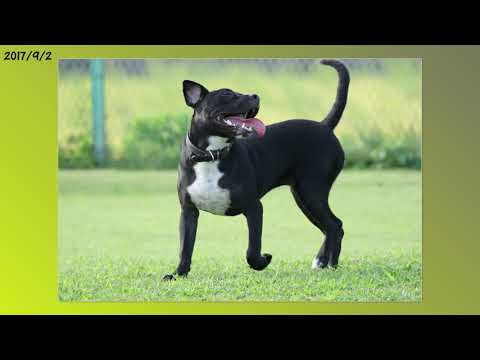 dogs-playing-at-the-dog-park-#62