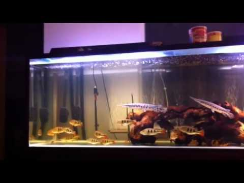 Monster fish tank youtube for Fish tank youtube