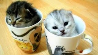 Video lucu anak kucing terbaru 2019 lucu dan imut banget || Funny & cute videos