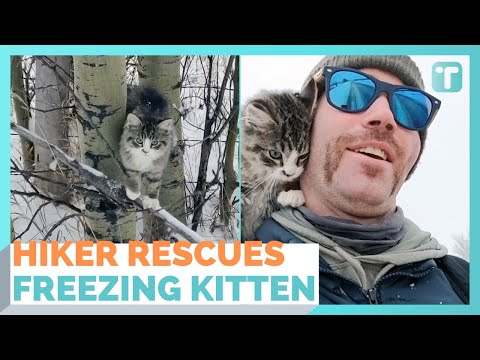 Hiker Rescues Kitten In Subzero Temperatures And Adopts It