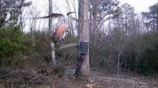 Interesting / unexplained trail cam images