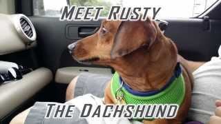 Rescue Transport For A Dachshund Named Rusty!