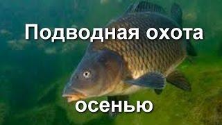 Подводная охота на Днепре осенью