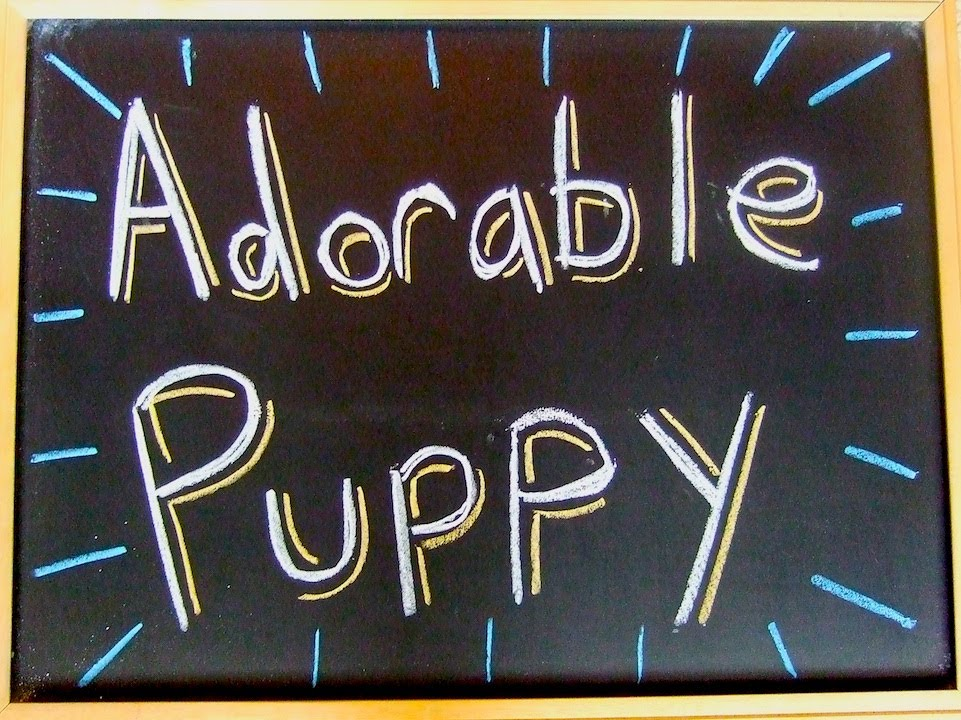 Adorable Puppy - A vlog about and featuring Dan Brown's puppy Arnie.