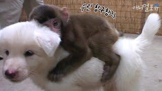 서울대공원 돌아다니다가 친구 사귄 새끼강아지 ㅠㅠ KBS 주주클럽 060827 방송