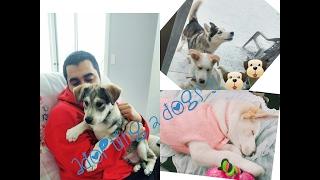 ADOPTING 2 DOGS ! VLOG