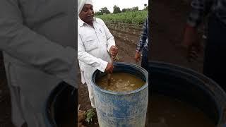 જીવામૃત કેમ બનાવવું..શીખો ખેડૂત પાસેથી......