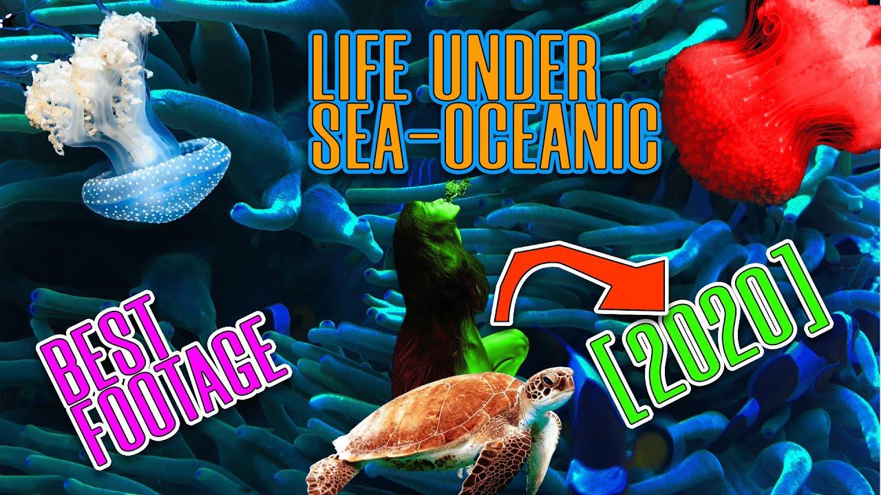 Ocean Life and Nature   Marine life under sea 2020