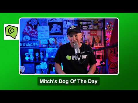 Mitch's Dog of the Day 12/1/20: Free College Basketball Betting Picks Predictions and Betting Tips