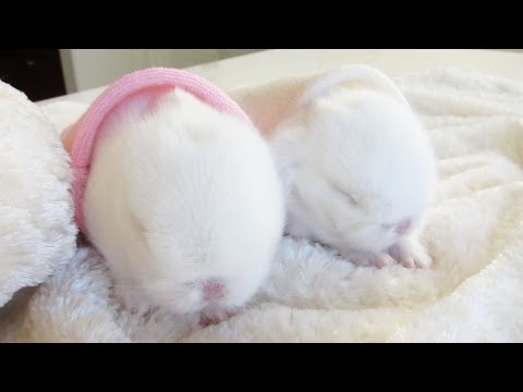 cute baby bunnies in bunny hideaways youtube