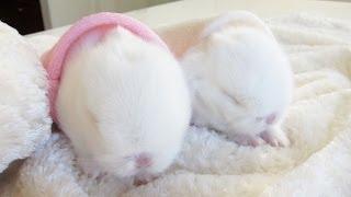 Cute baby bunnies... in bunny hideaways!
