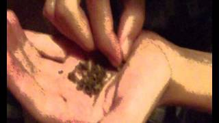 Enrolando uma otima weed