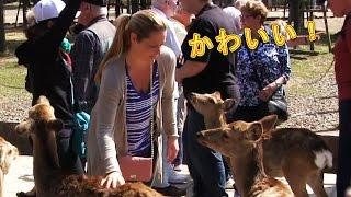 鹿と戯れる! 奈良公園 外国人観光客 Deer in Nara Park かわいい動物 Funy Cute animals