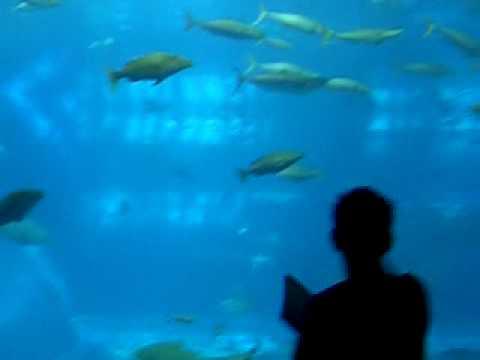 aquario de okinawa