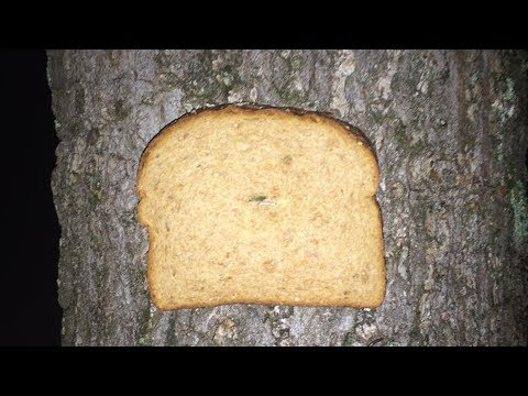 Images of Bread Stapled to Trees