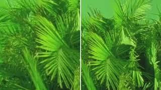 Calvin Harris ft. Frank Ocean & Migos - Slide (Goodgrip Remix)