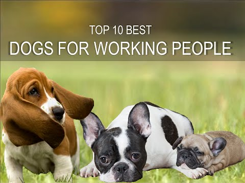 Ten Best Dogs for People who work all the day