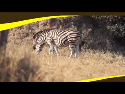 Globetrotter Travels (Africa Commercial)
