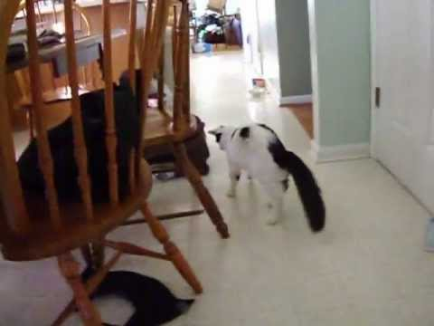 My cat trick using only a piece of scotch tape