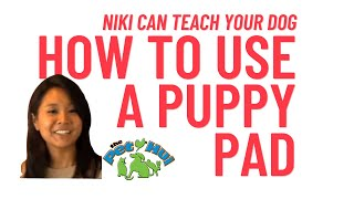 How To Train Your Dog To Use Puppy Pads