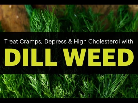 Surprising Dill Weed Benefits (treat cramps, Epilepsy, depress )