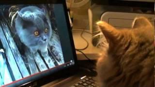 Интернет-Коты