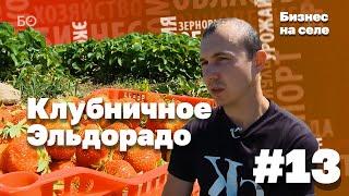видео Выращивание клубники на продажу