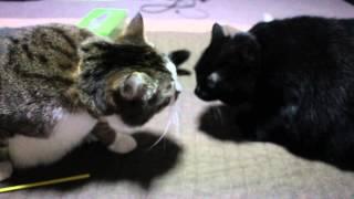 仕掛けたのは黒猫の味噌です。