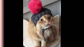 Cats will make you laugh harder, best of instagram - Funny animal compilation