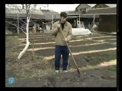 Плоскорез фокина – это необычный садово – огородный инструмент, кроме своей основной цели – прополки и рыхления, он может выполнять ещё до двух десятков операций на земле. Основная работа плоскореза заключается в срезании или выдёргивании сорных трав при прохождении его лезвия.
