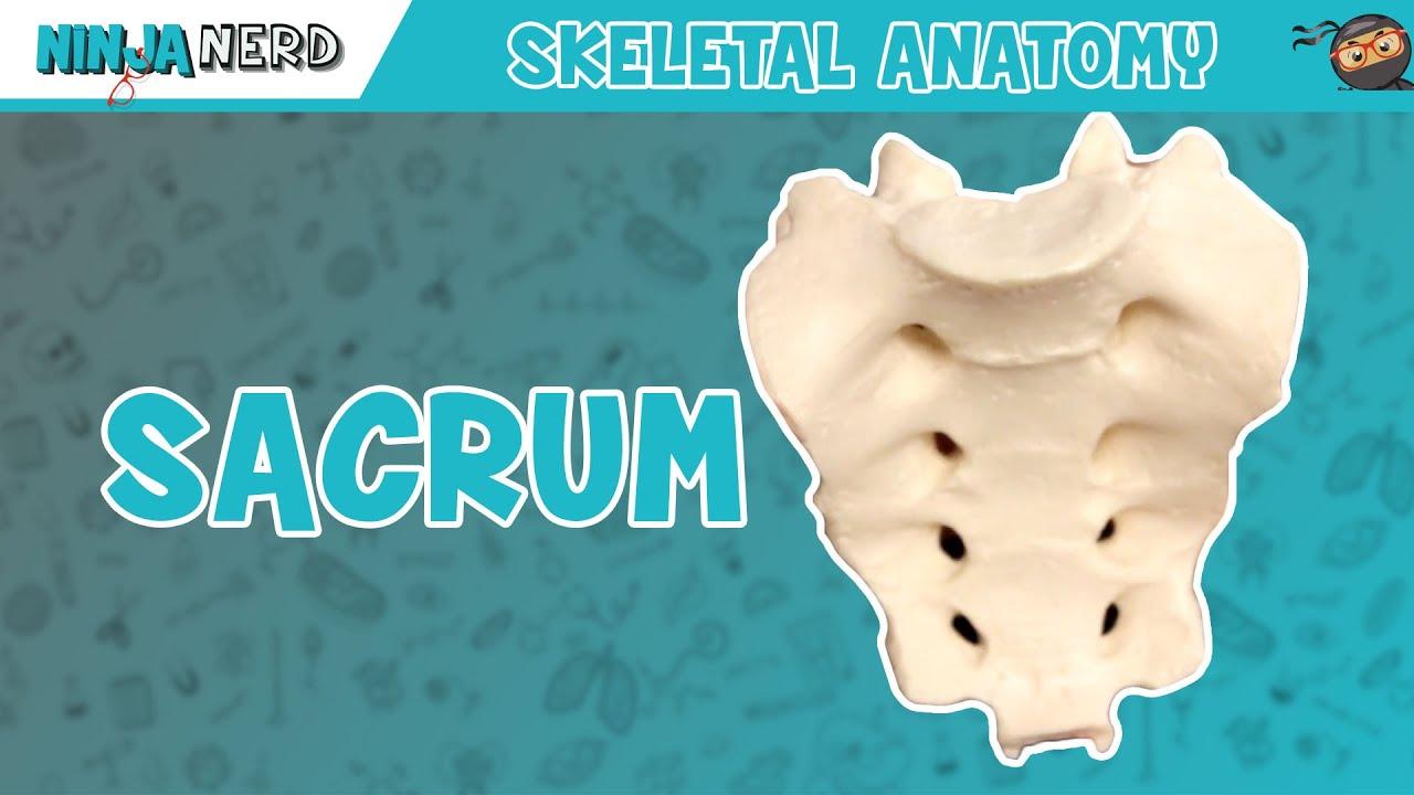 Sacrum Anatomy - YouTube
