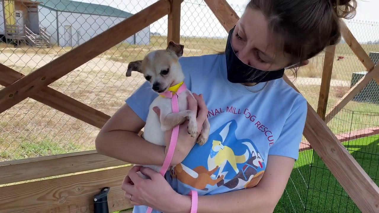 Gentle Moments of Healing for Puppy Mill Survivors